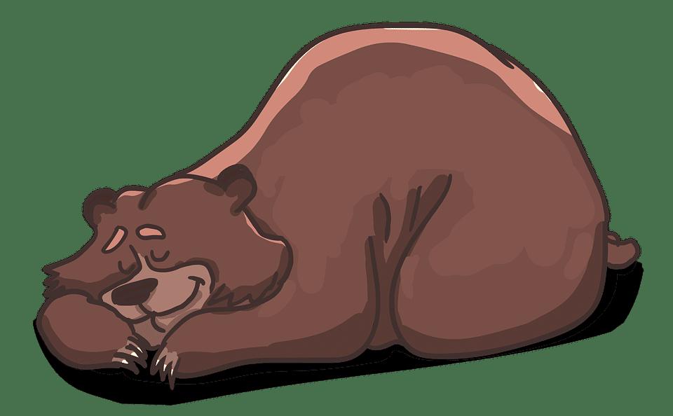 A bear sleeping