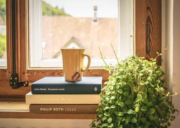 Plant on window shelf