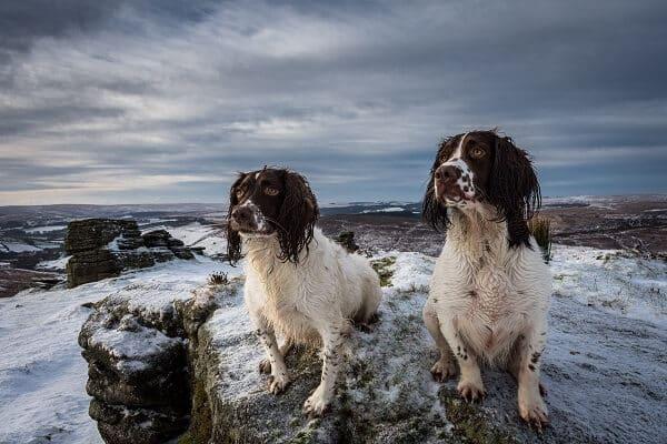 muddy-dogs-on-mountain