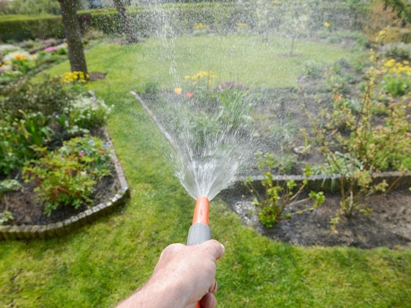A water hose giving the garden a dip.