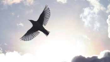 Featured-help-trapped-bird-fly-to-freedom