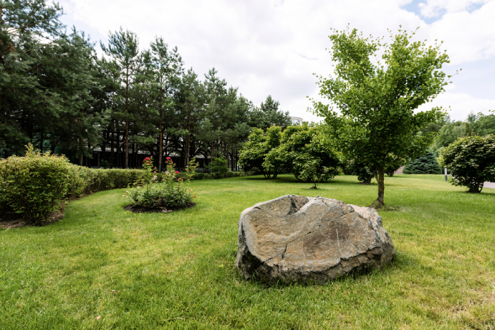 Lawn with big rock and trees