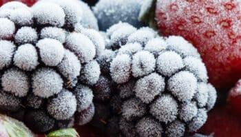 Featured-freezer-temps