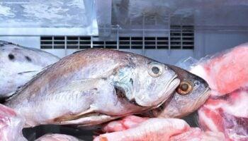 Freezer Smelling of Fish